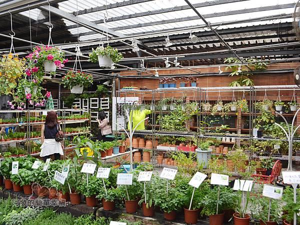 台北花卉村21-和香草說說話-提供各式香草植物香草副產品