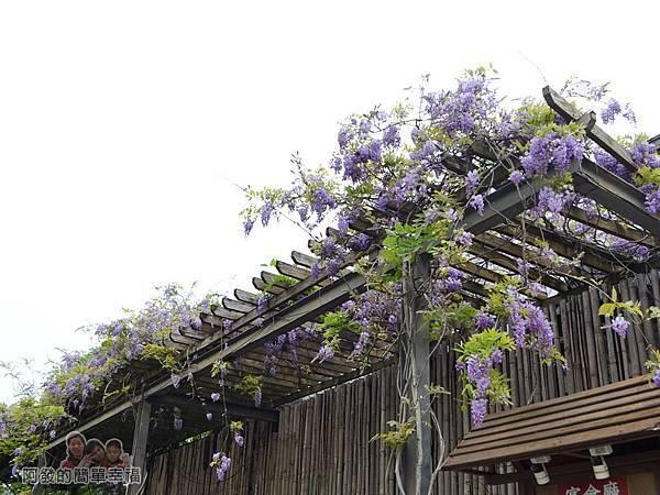 台北花卉村31-萬象廣場-屋簷下的紫藤花