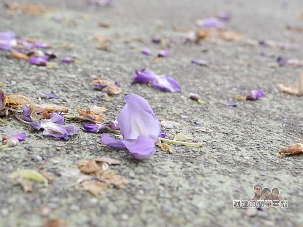 台北花卉村34-萬象廣場-紫藤落花遍地