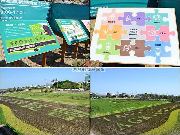 農業博覽會52-孕育彩稻-組圖.jpg