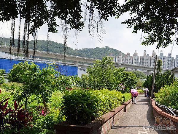 泰山繡球花步道03-山腳里公園步道