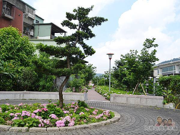 泰山繡球花步道16-繡球花小圓環