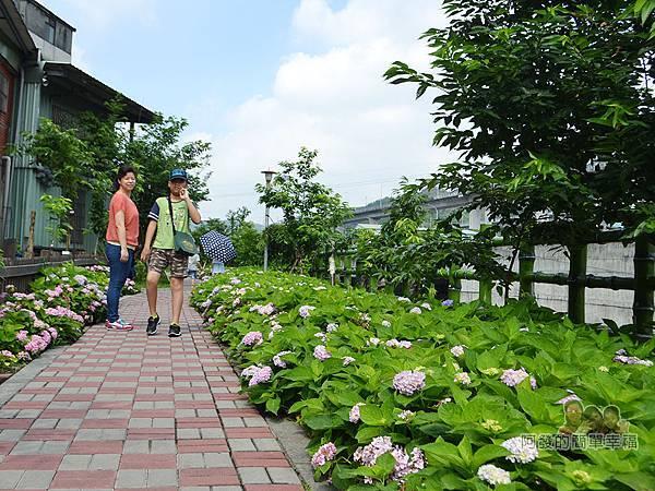 泰山繡球花步道20-清幽的繡球花步道