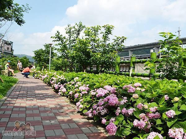 泰山繡球花步道24-有如小型後花園秘境