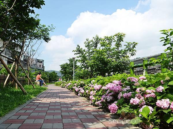泰山繡球花步道30-坐在一旁的石椅上休憩悠閒又愜意