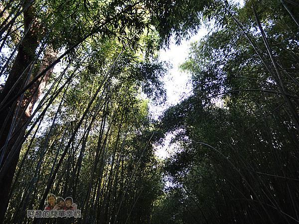 烏嘎彥竹林15-茂密的竹林隧道
