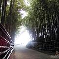 烏嘎彥竹林16-竹林隧道中的入口處一景