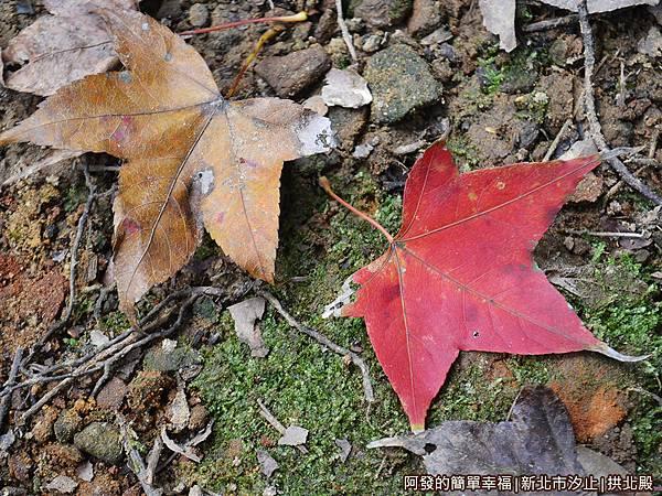 汐止拱北殿32-楓紅落葉