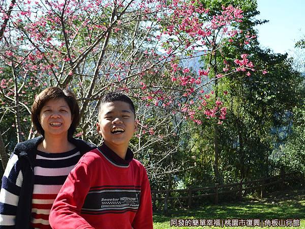 角板山16-草皮旁初綻的櫻花樹