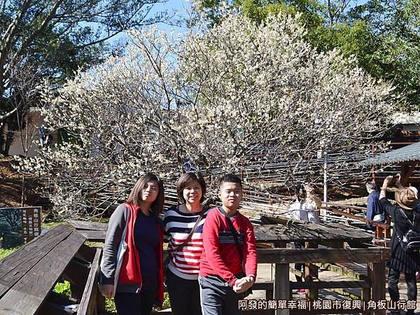 角板山18-花開茂盛的梅樹