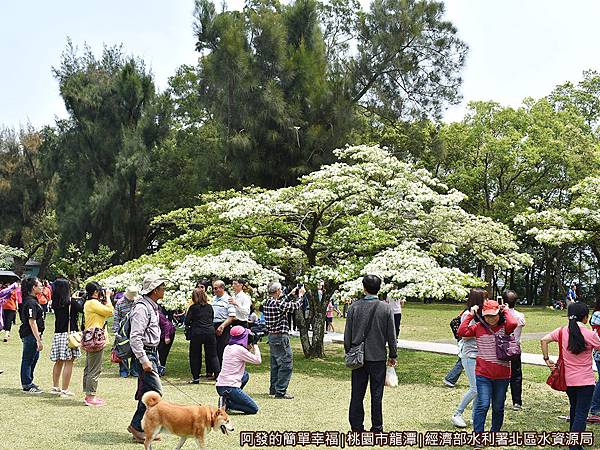 北區水資源局09-大草坪上拍照留影的人潮