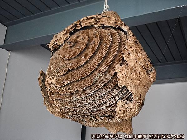 桃園市客家文化館10-好大的蜂窩