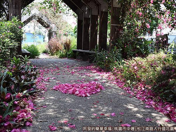 松江南路小花園18-桃紅色的落花遍地.JPG