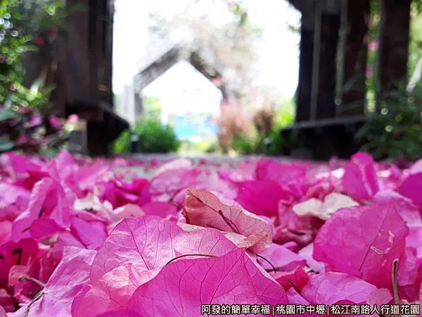 松江南路小花園22-桃紅色的落花遍地.jpg