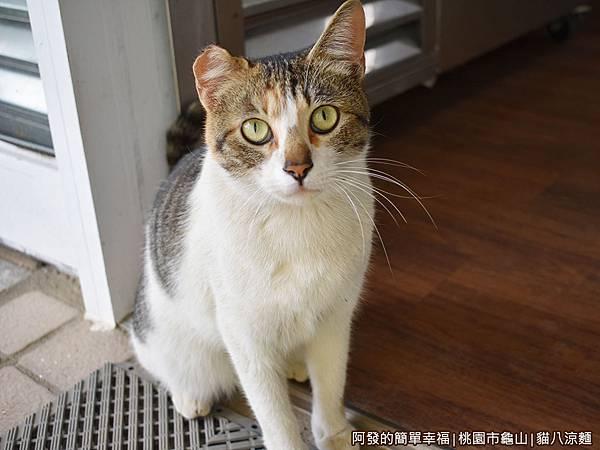 貓八涼麵03-貓咪.JPG