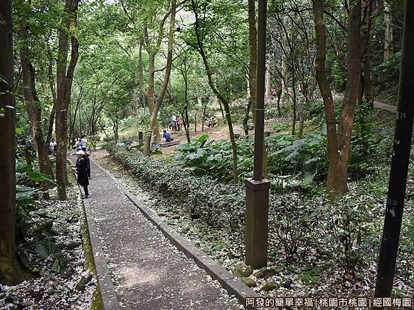 經國梅園19-登山步道上盡是雪白的落花.JPG