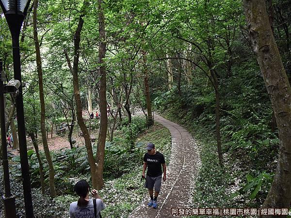 經國梅園20-綠意盎然桐花紛飛的林蔭小徑.JPG