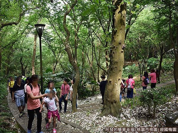 經國梅園15-遊客們驚喜連連.JPG