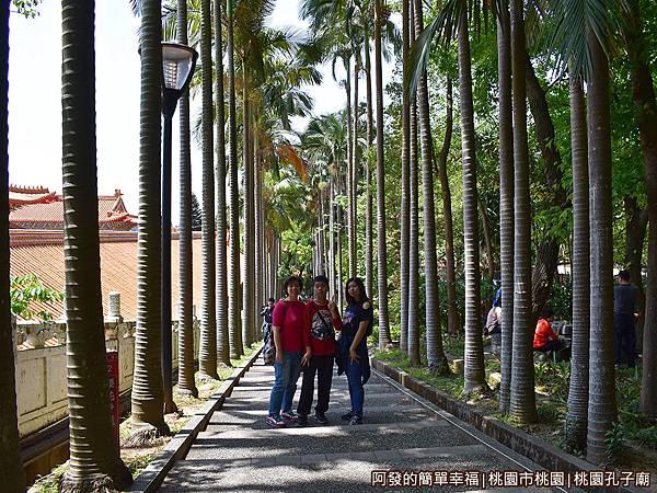 桃園孔子廟16-一旁的櫻花步道.JPG