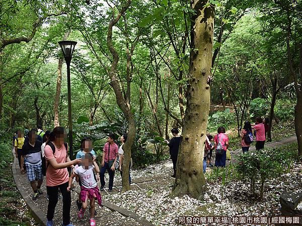 虎頭山公園周邊景點美食04-經國梅園-遊客們驚喜連連.JPG