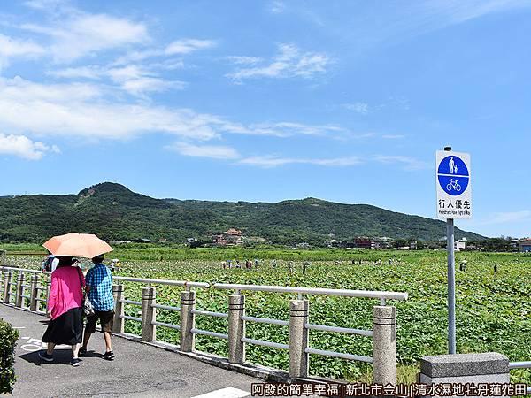 清水濕地牡丹蓮花田01-磺清大橋旁清水濕地.JPG