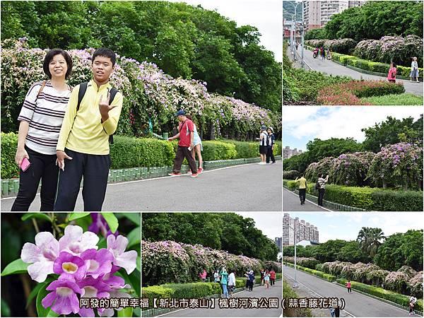 新北市泰山-楓樹河濱公園(蒜香藤花道)all.jpg