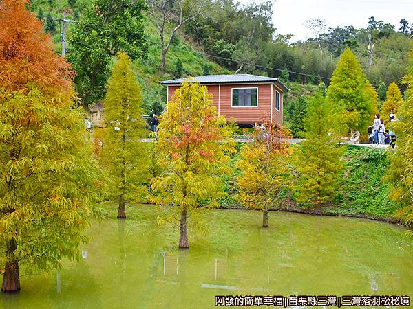 三灣落羽松秘境21-池畔旁的木屋.JPG