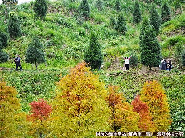 三灣落羽松秘境24-山坡上的老婆.JPG