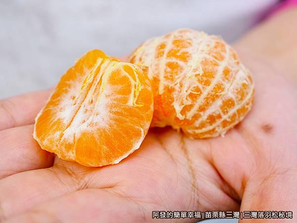 三灣落羽松秘境05-砂糖桔頗甜.JPG