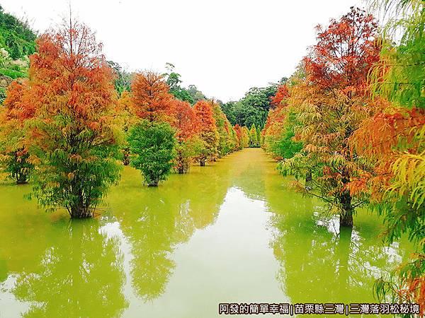 三灣落羽松秘境15-很美麗.jpg