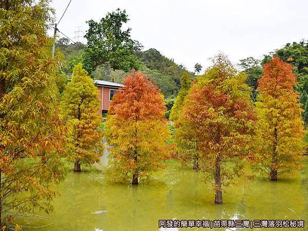 三灣落羽松秘境20-池畔旁一景.JPG