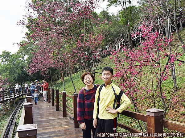 長庚養生文化村20-綻放的八重櫻樹前留影.JPG