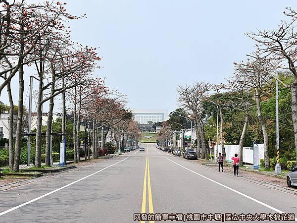 中央大學木棉花道01-中大路約500公尺的木棉花道.JPG