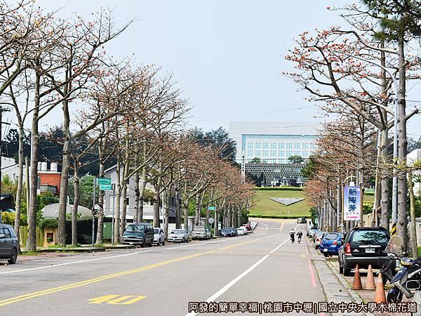 中央大學木棉花道03-木棉花道左側花況.JPG