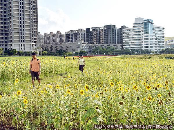 稼日蒔光基地12-漫步在向日葵花海中.JPG