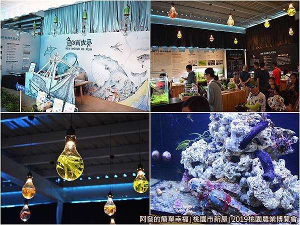 11-魚の新世界04-組圖.jpg