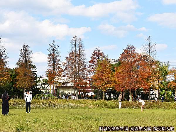 大溪落羽松大道09-大片草坪與整排落羽松為背景.JPG