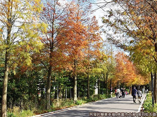 大溪落羽松大道18-返回路上所呈現的景致又有著不同的美感.JPG
