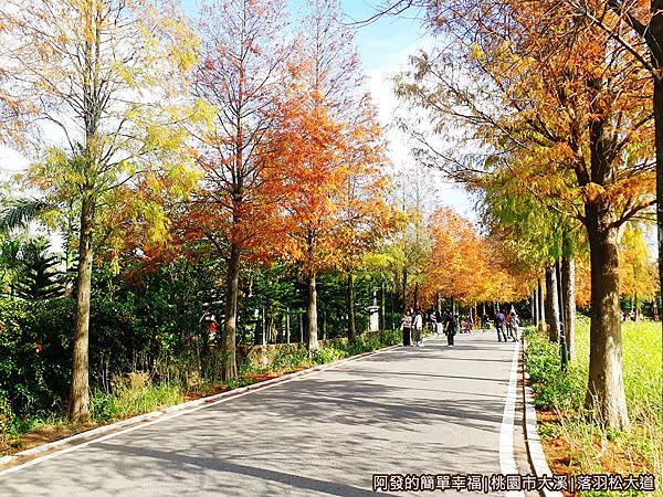 大溪落羽松大道20-有如在北國之秋的鄉村小路如畫般的美麗.jpg