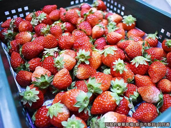 日月香03-一箱箱的新鮮草莓.JPG