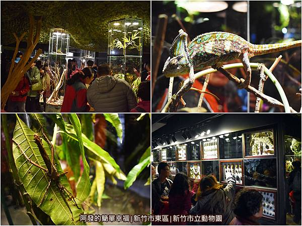 新竹市立動物園05-昆蟲館組圖.jpg