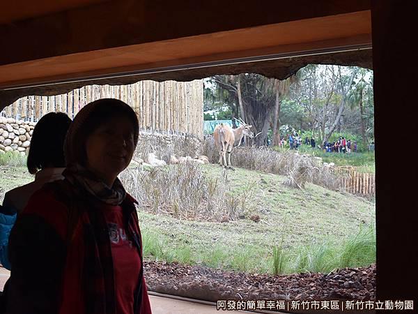新竹市立動物園19-伊蘭羚羊.JPG