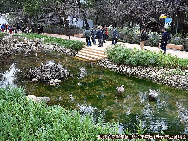 新竹市立動物園22-池畔.JPG