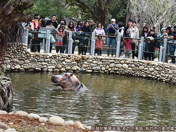 新竹市立動物園23-河馬.JPG