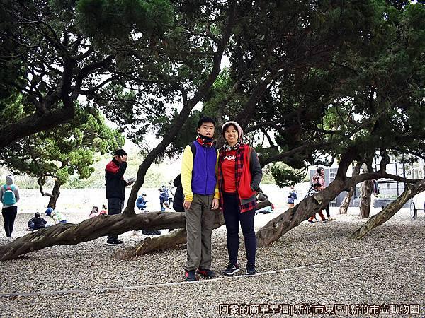 新竹市立動物園30-柏之丘三棵長橫的柏樹.JPG