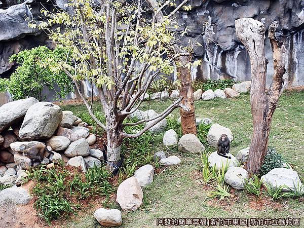 新竹市立動物園31-猴區.JPG