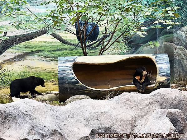 新竹市立動物園37-馬來熊.JPG