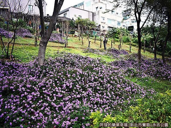 永吉公園30-紫色花海小山坡.JPG