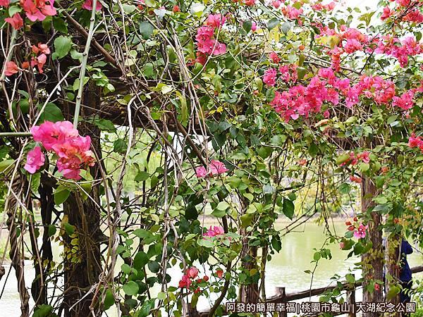 大湖紀念公園03-花棚廊道上的九重葛.JPG
