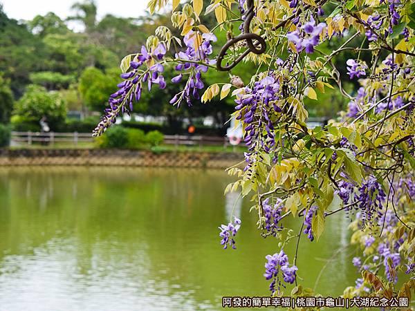 大湖紀念公園06-紫藤花與湖畔.JPG
